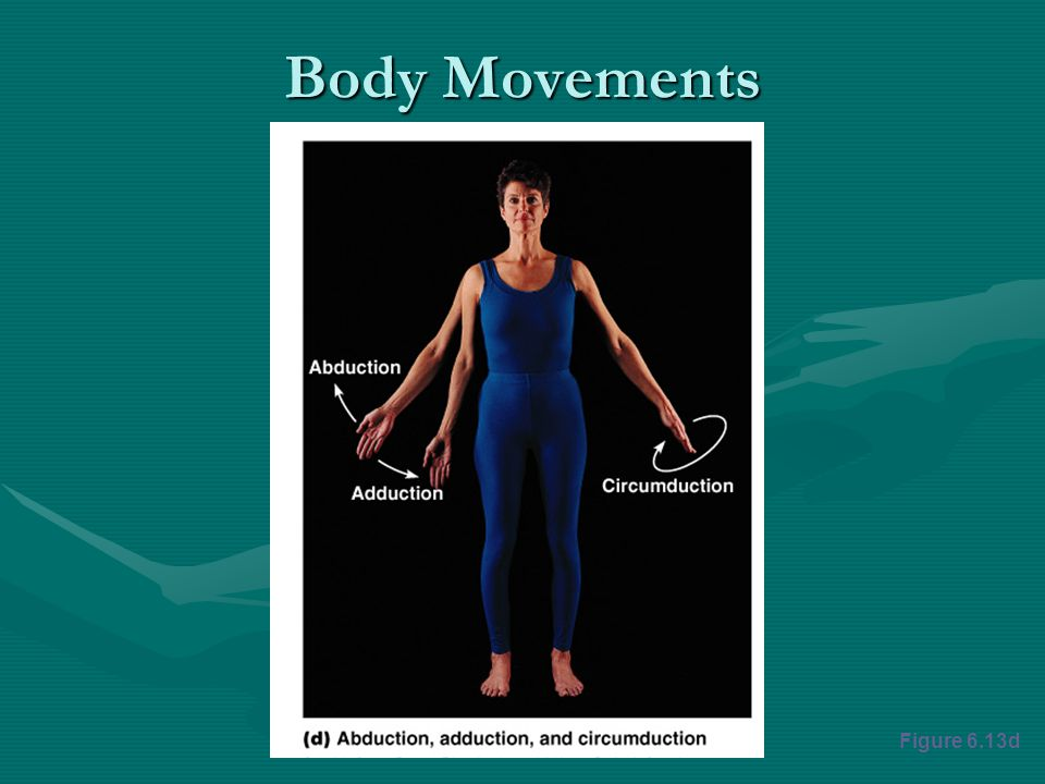Body Movements Figure 6.13d