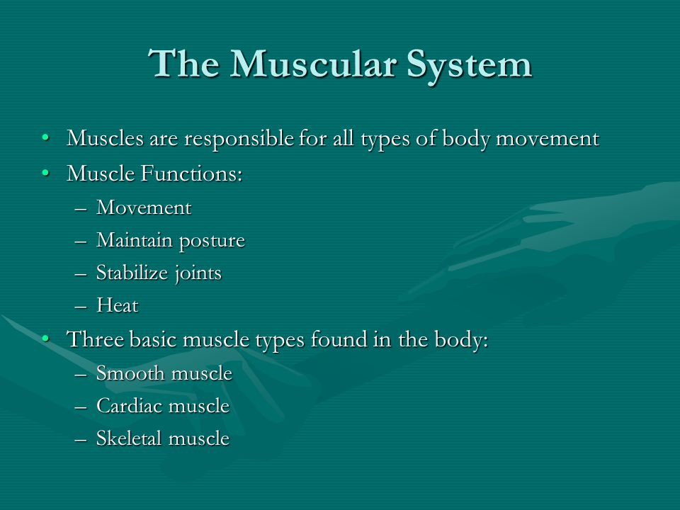 The Muscular System Muscles are responsible for all types of body movement. Muscle Functions: Movement.
