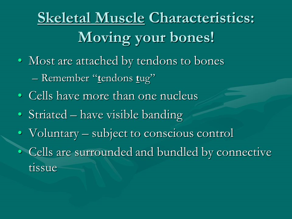 Skeletal Muscle Characteristics: Moving your bones!