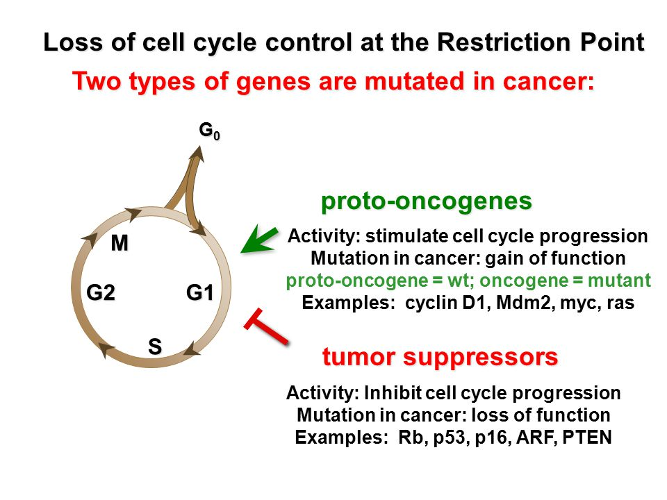 Loss of cell cycle control at the Restriction Point