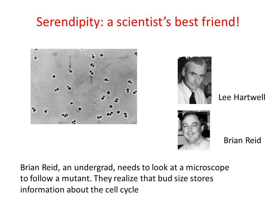 Serendipity: a scientist's best friend!