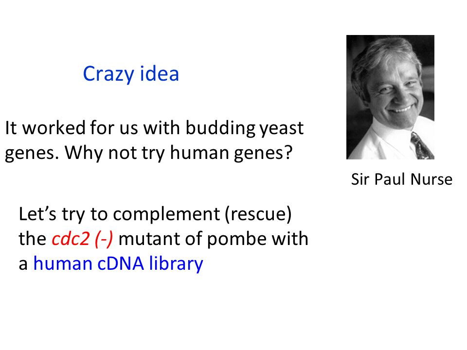 Crazy idea It worked for us with budding yeast genes. Why not try human genes Sir Paul Nurse.