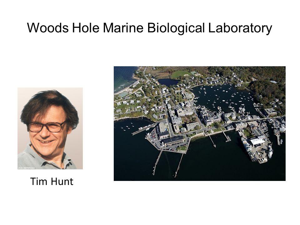 Woods Hole Marine Biological Laboratory
