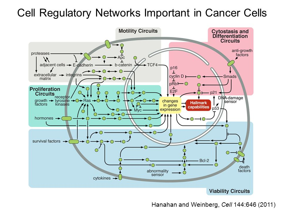 Cell Regulatory Networks Important in Cancer Cells