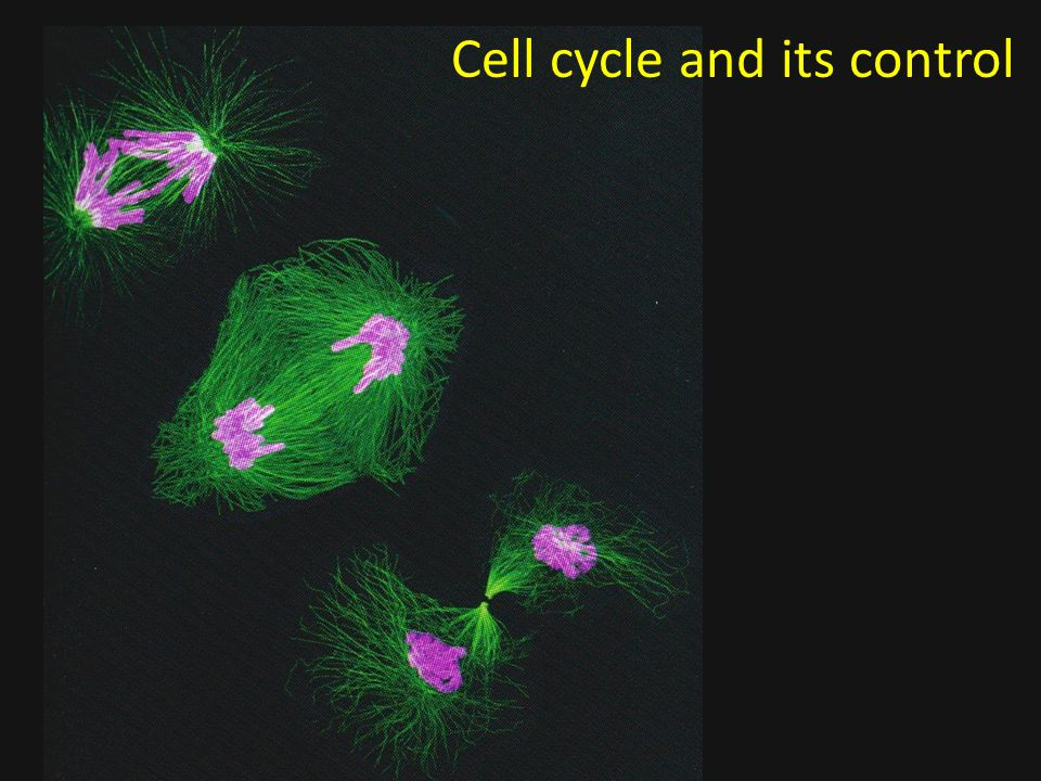 Cell cycle and its control