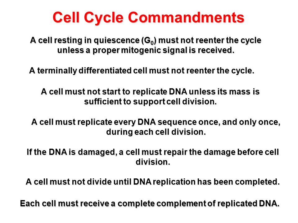 Cell Cycle Commandments