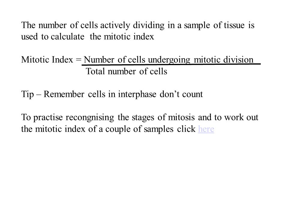 The number of cells actively dividing in a sample of tissue is used to calculate the mitotic index