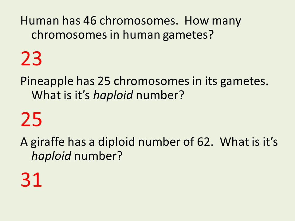 Human has 46 chromosomes. How many chromosomes in human gametes