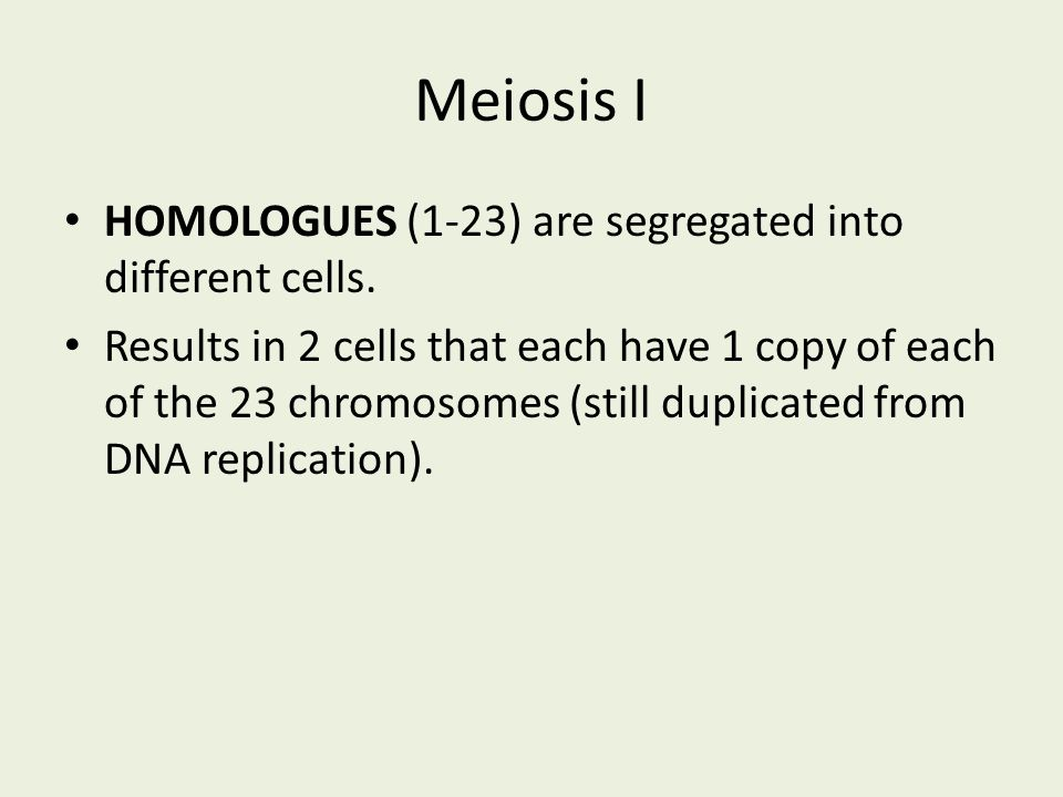 Meiosis I HOMOLOGUES (1-23) are segregated into different cells.