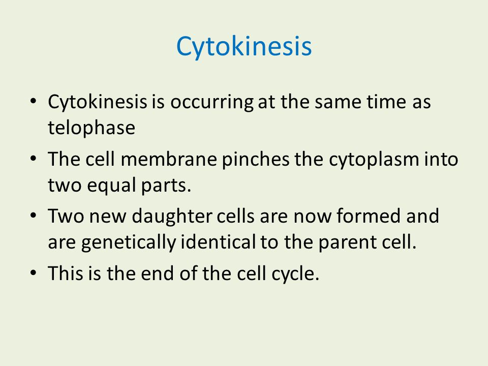 Cytokinesis Cytokinesis is occurring at the same time as telophase