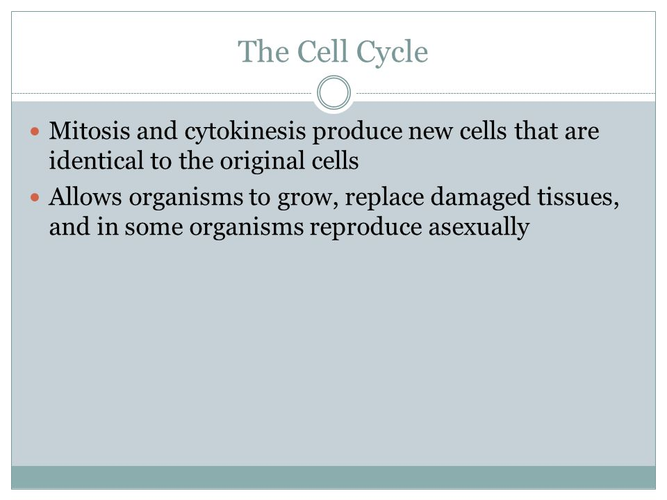 The Cell Cycle Mitosis and cytokinesis produce new cells that are identical to the original cells.