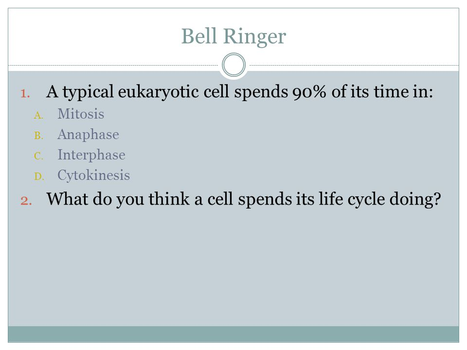 Bell Ringer A typical eukaryotic cell spends 90% of its time in: