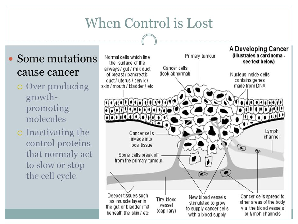 When Control is Lost Some mutations cause cancer