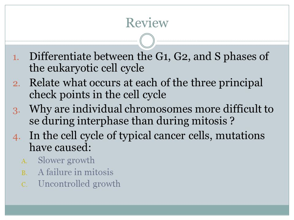 Review Differentiate between the G1, G2, and S phases of the eukaryotic cell cycle.