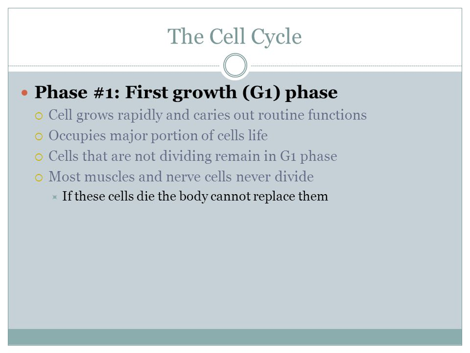 The Cell Cycle Phase #1: First growth (G1) phase