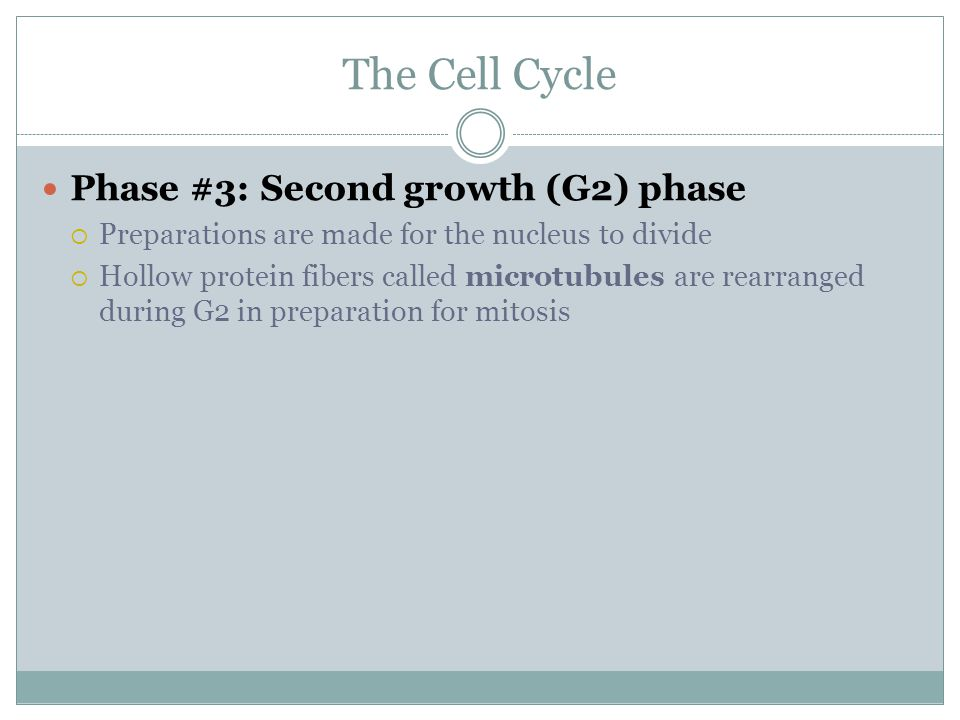 The Cell Cycle Phase #3: Second growth (G2) phase