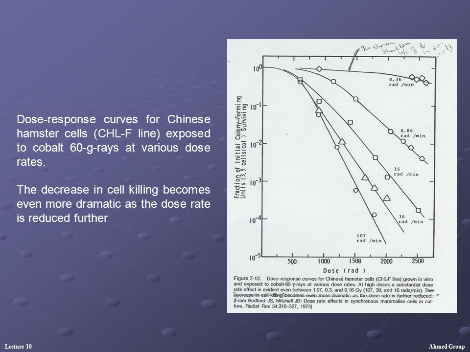 Dose-response curves for Chinese hamster cells (CHL-F line) exposed to cobalt 60-g-rays at various dose rates.