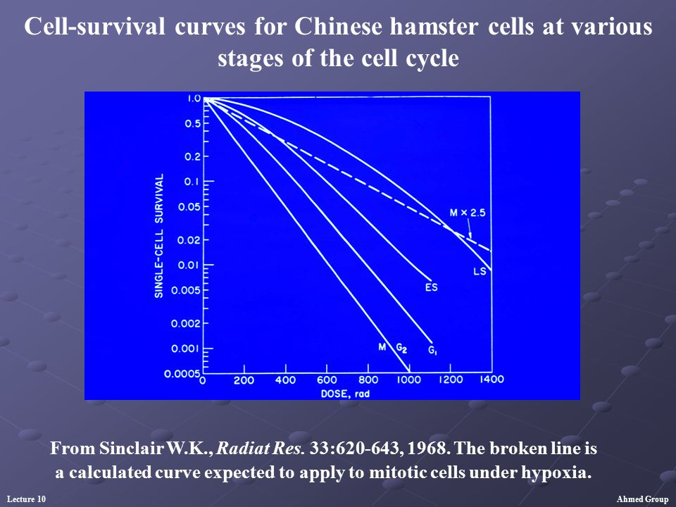 Cell-survival curves for Chinese hamster cells at various stages of the cell cycle