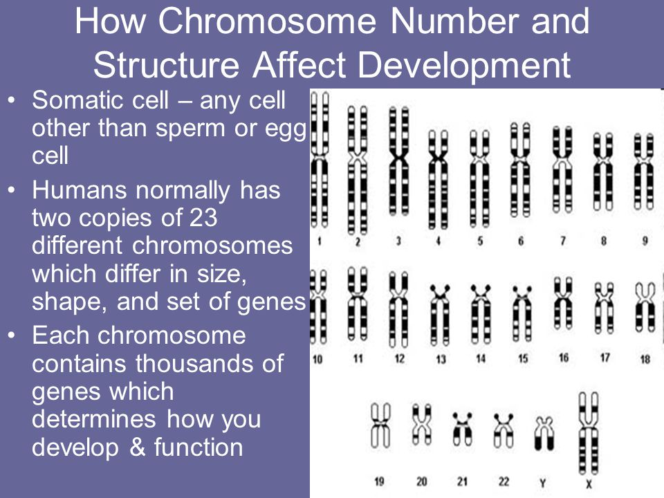 How Chromosome Number and Structure Affect Development