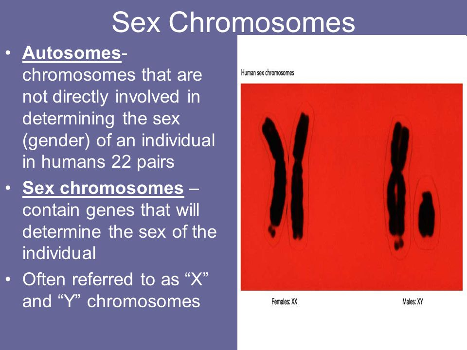 Sex Chromosomes Autosomes-chromosomes that are not directly involved in determining the sex (gender) of an individual in humans 22 pairs.