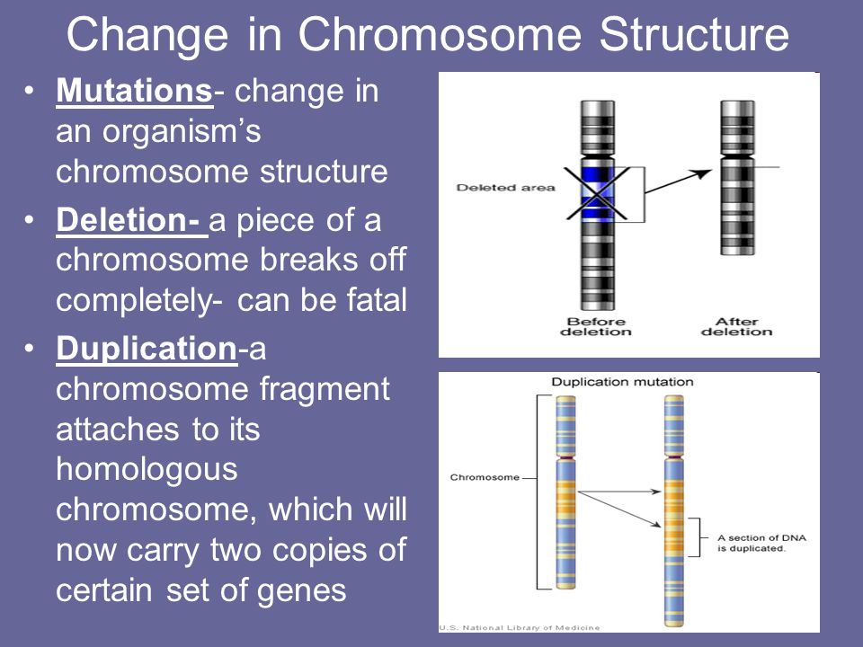 Change in Chromosome Structure