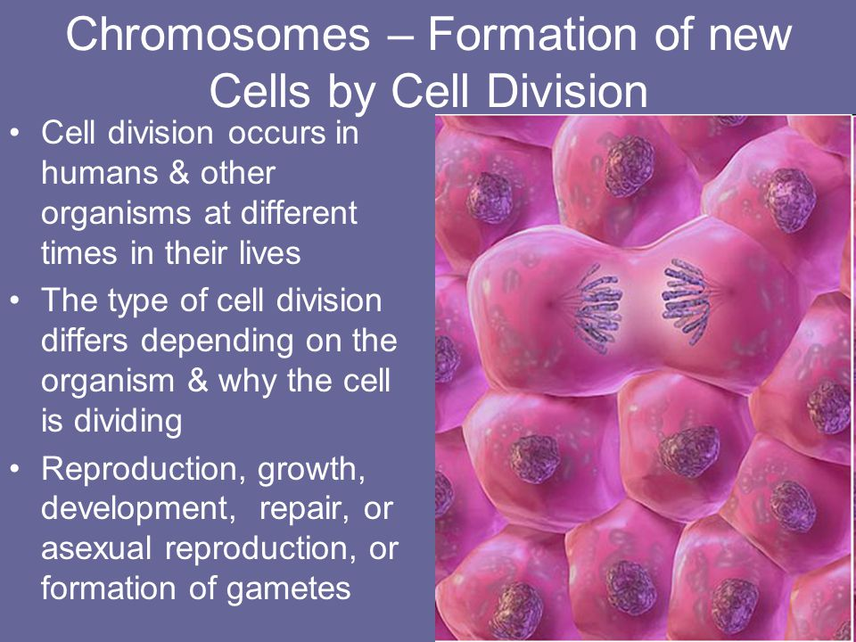 Chromosomes – Formation of new Cells by Cell Division