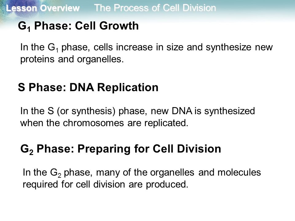S Phase: DNA Replication