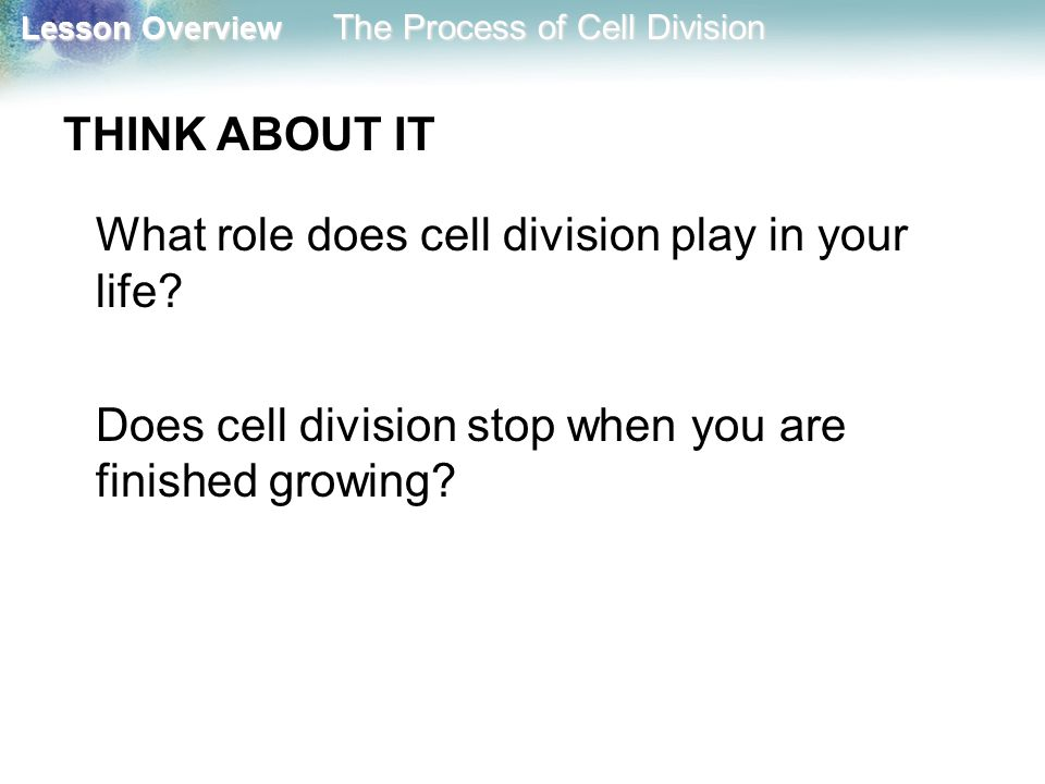 Does cell division stop when you are finished growing