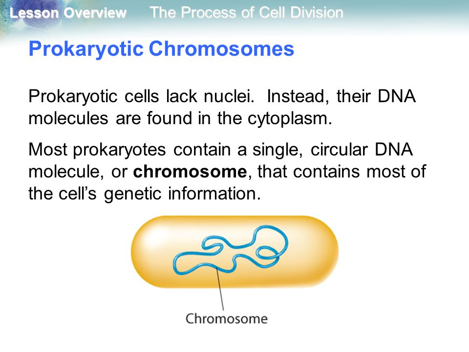 Prokaryotic Chromosomes