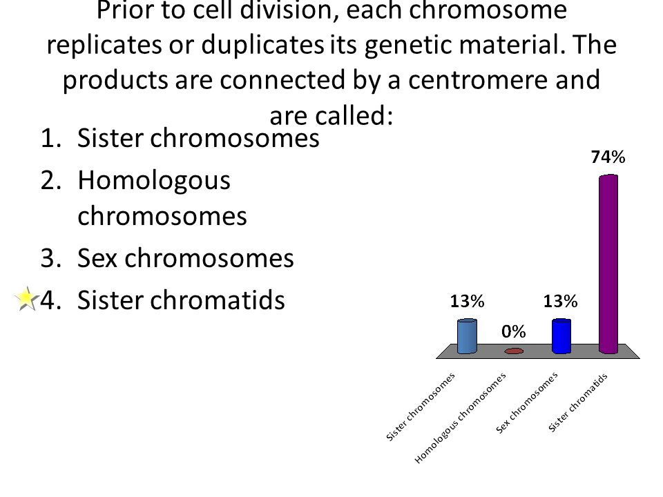 Prior to cell division, each chromosome replicates or duplicates its genetic material. The products are connected by a centromere and are called: