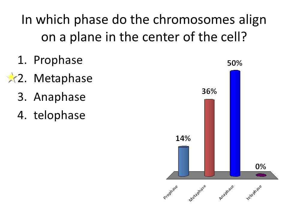 In which phase do the chromosomes align on a plane in the center of the cell