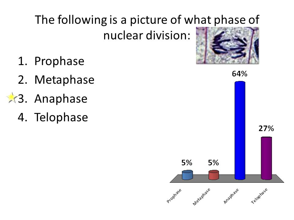 The following is a picture of what phase of nuclear division: