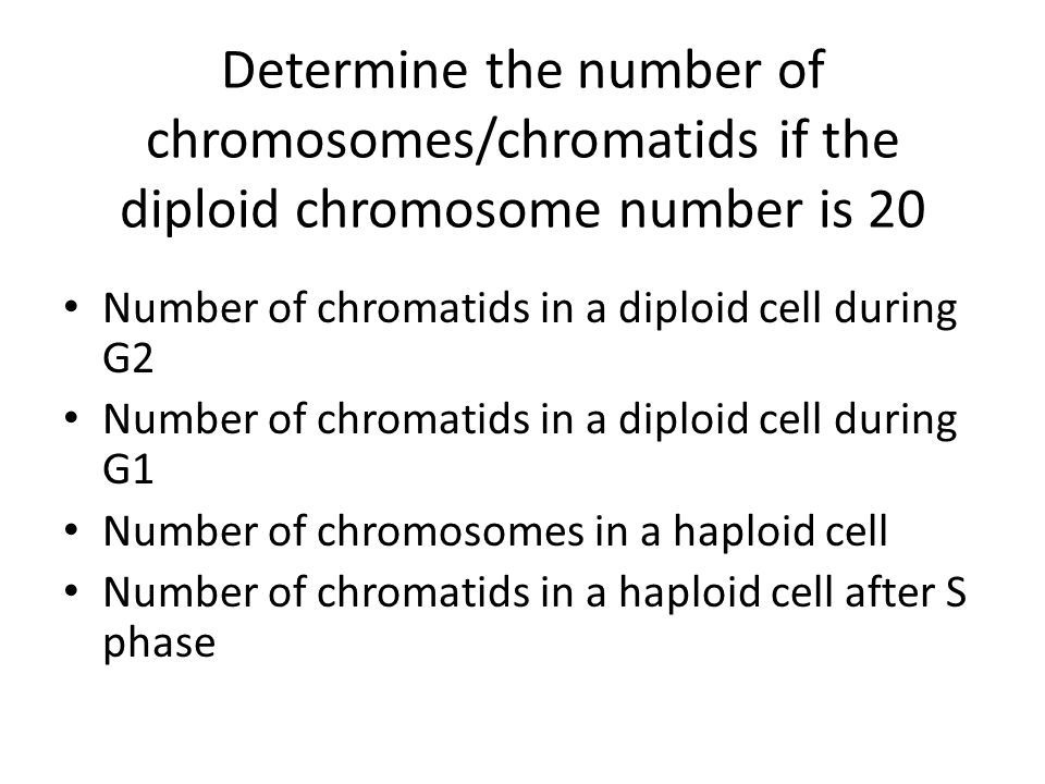 Determine the number of chromosomes/chromatids if the diploid chromosome number is 20