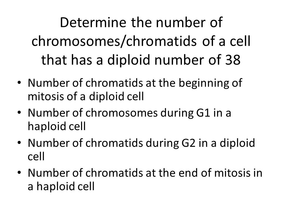 Determine the number of chromosomes/chromatids of a cell that has a diploid number of 38