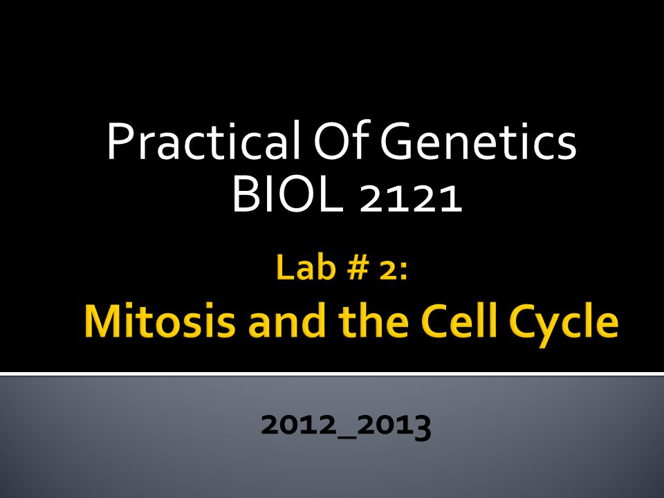 Lab # 2: Mitosis and the Cell Cycle 2012_2013