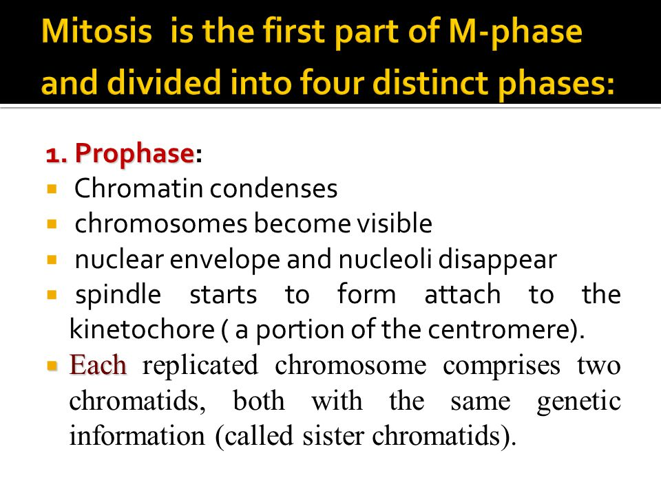 Mitosis is the first part of M-phase and divided into four distinct phases:
