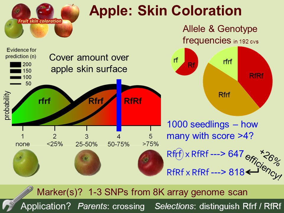 Apple: Skin Coloration