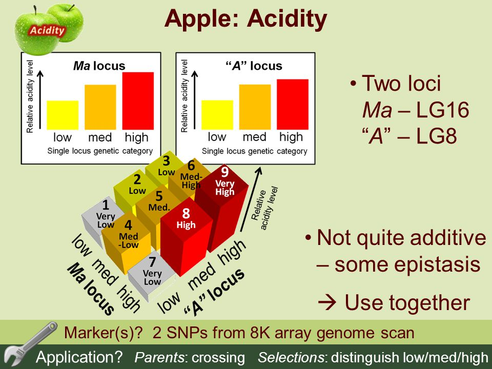 Apple: Acidity Two loci Ma – LG16 A – LG8