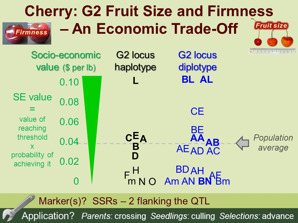 Cherry: G2 Fruit Size and Firmness – An Economic Trade-Off