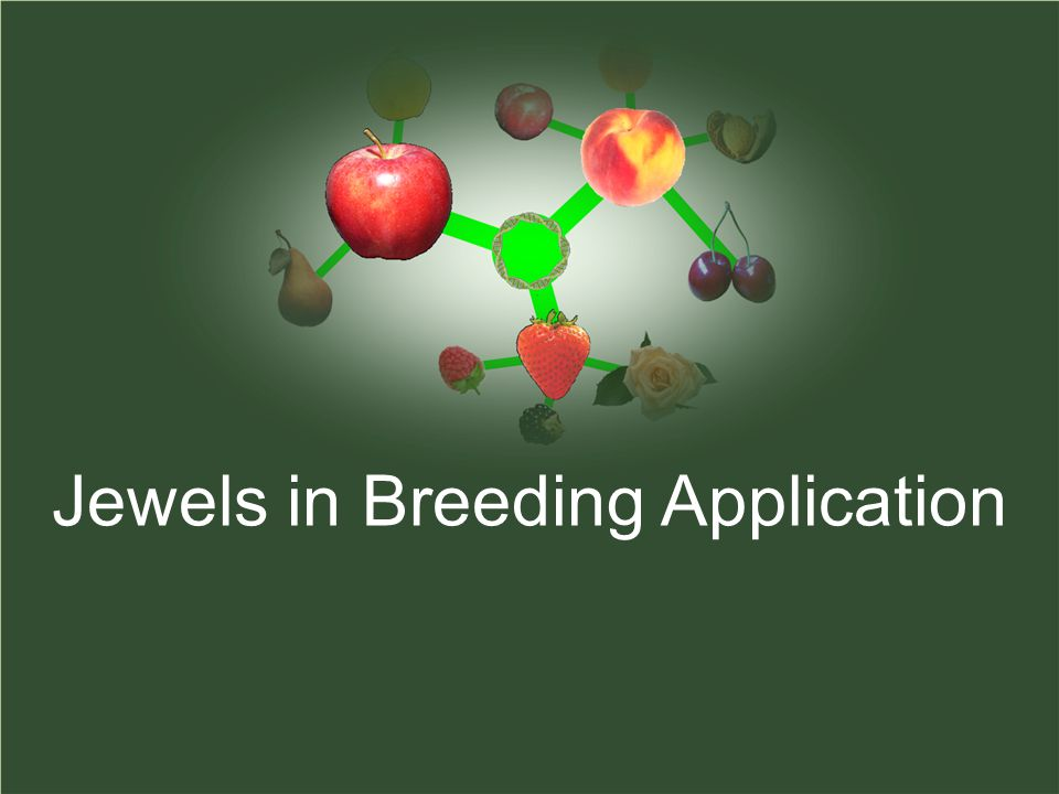 Jewels in Breeding Application