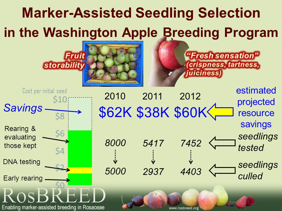 Marker-Assisted Seedling Selection