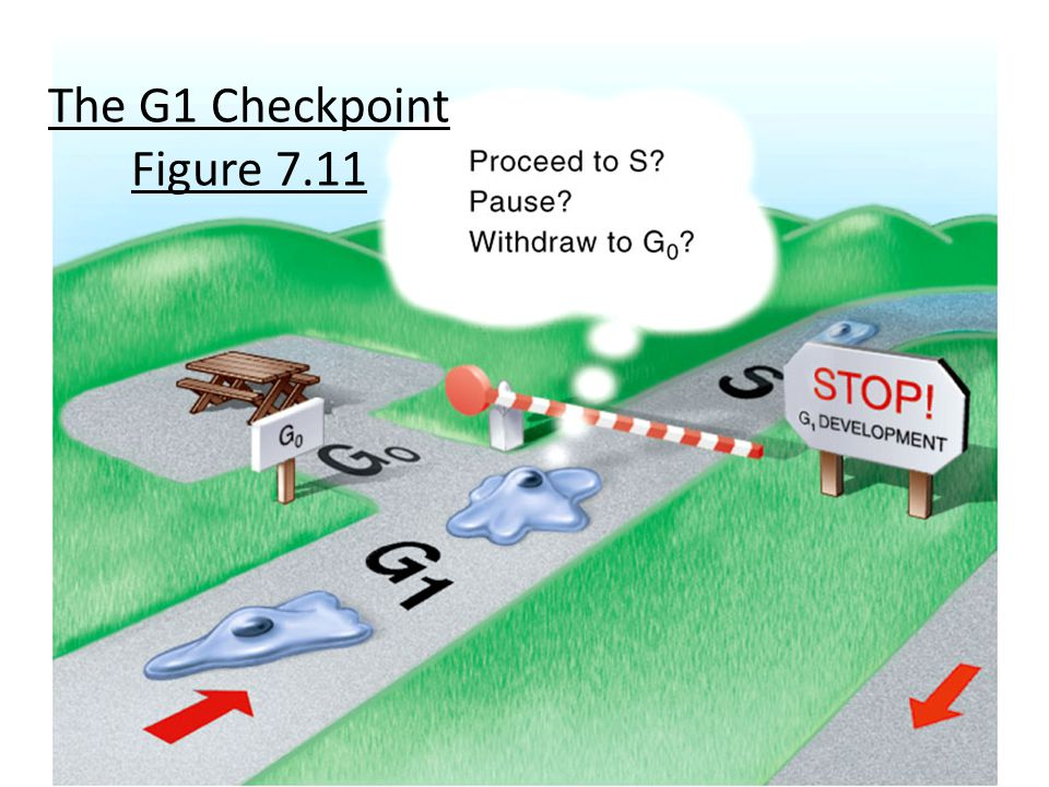 The G1 Checkpoint Figure 7.11