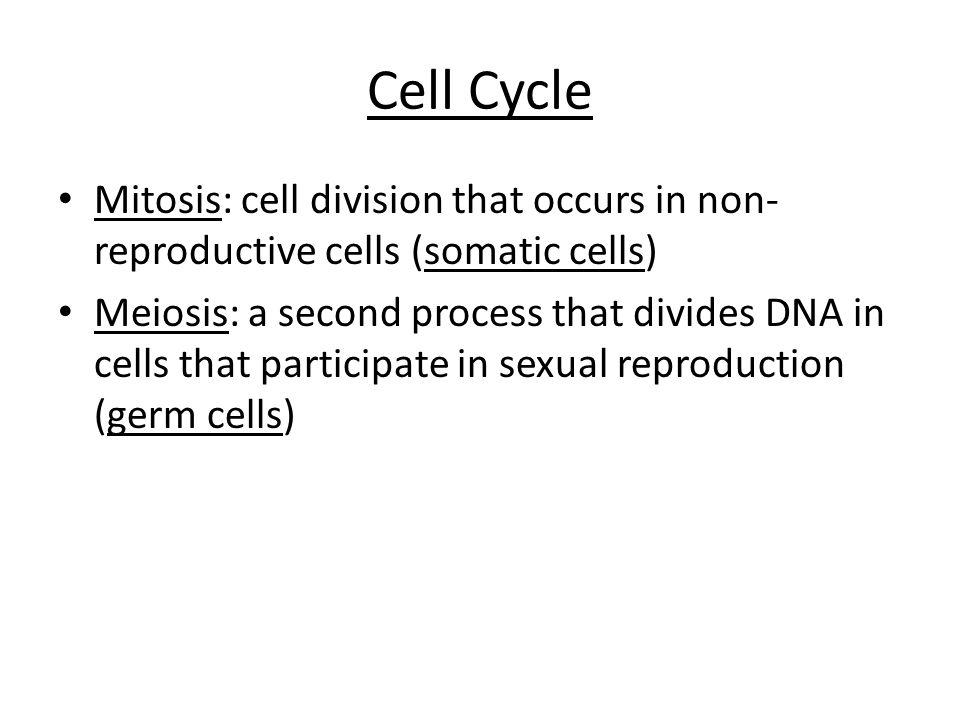 Cell Cycle Mitosis: cell division that occurs in non-reproductive cells (somatic cells)