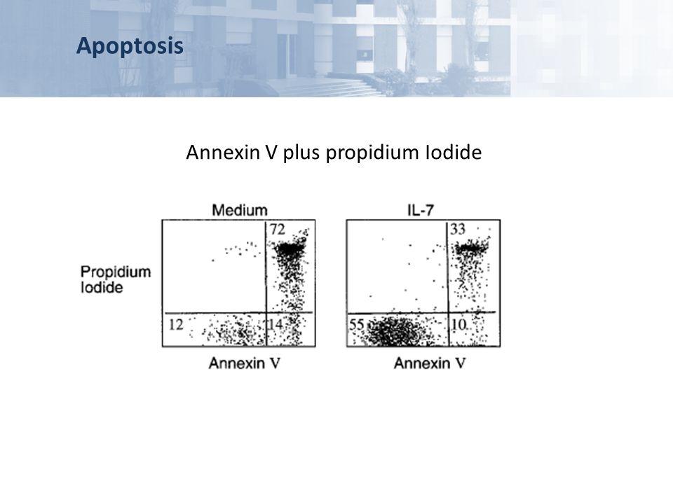 Annexin V plus propidium Iodide