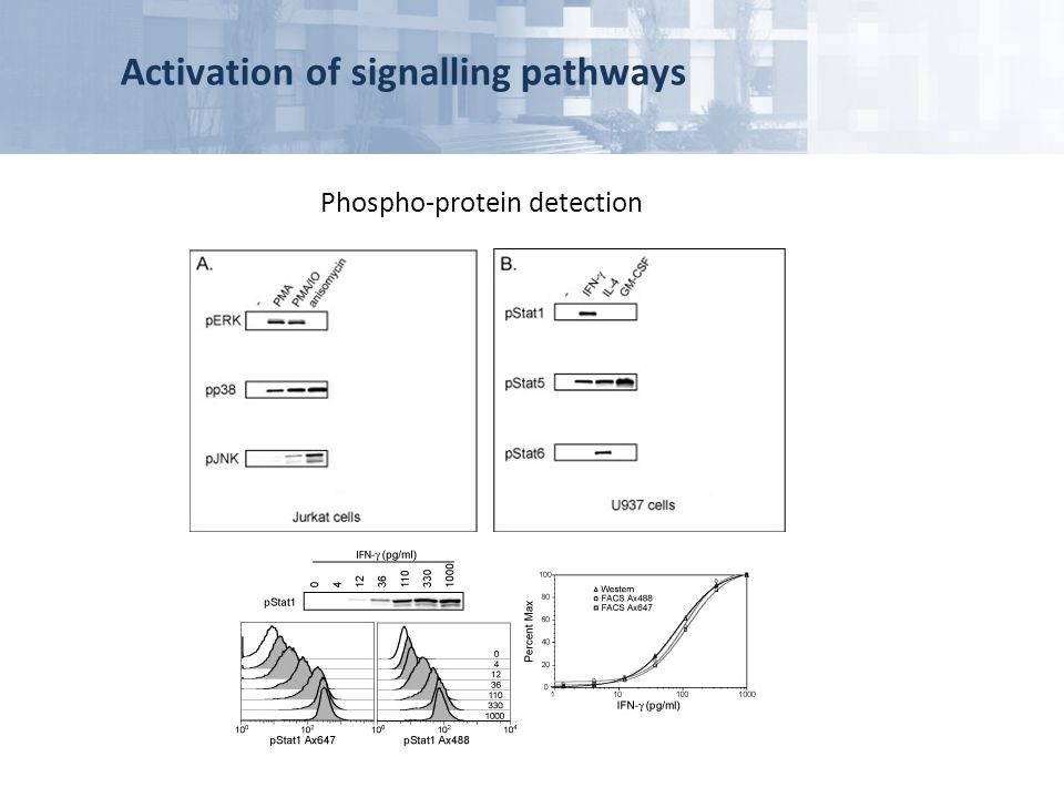 Phospho-protein detection
