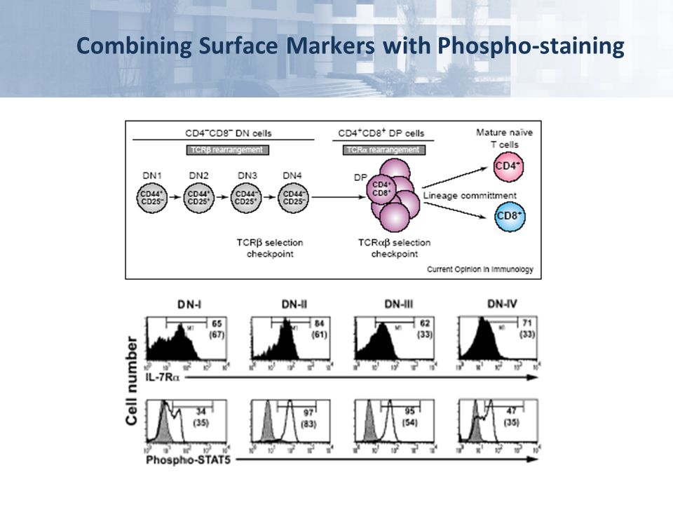 Combining Surface Markers with Phospho-staining