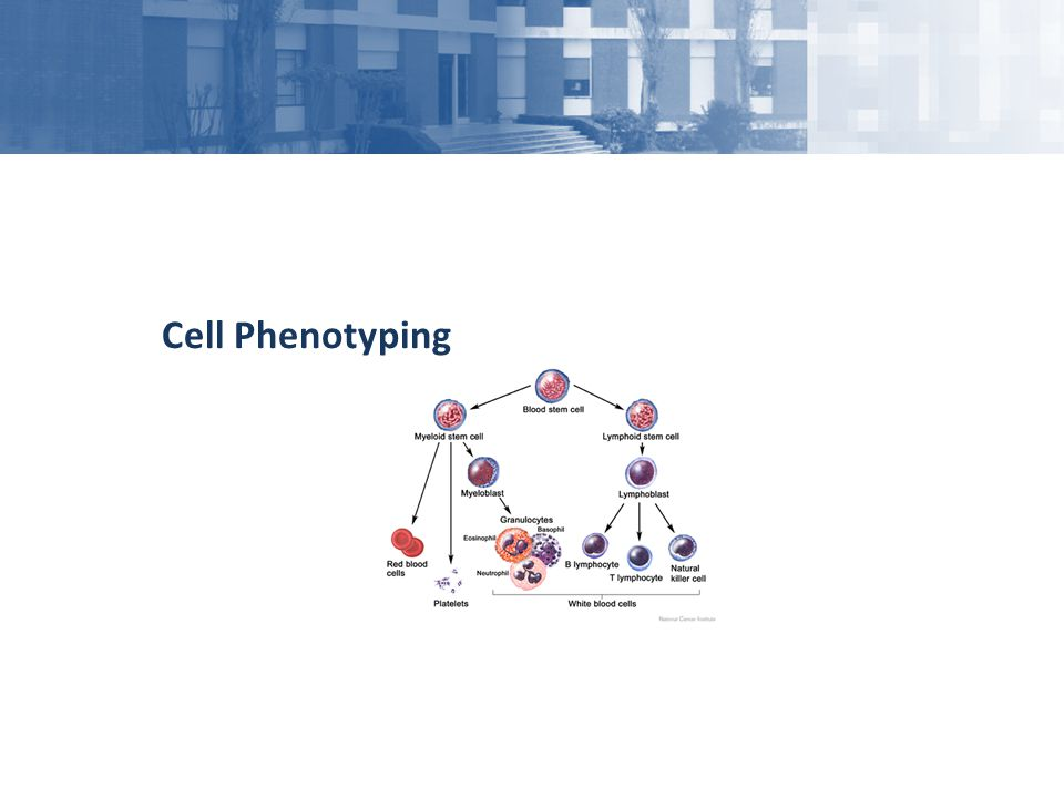 Cell Phenotyping