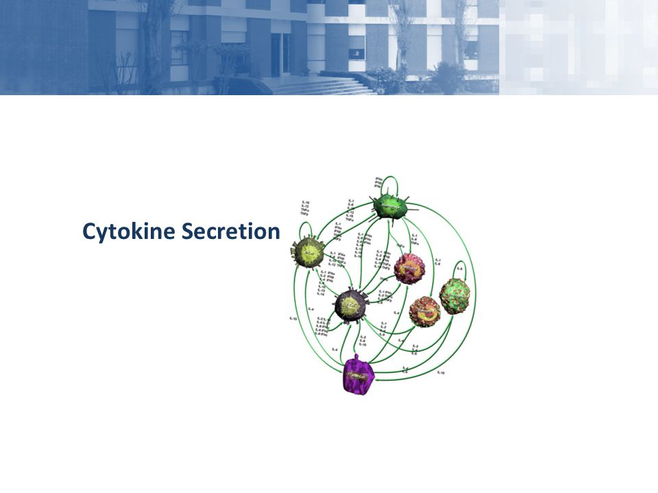Cytokine Secretion