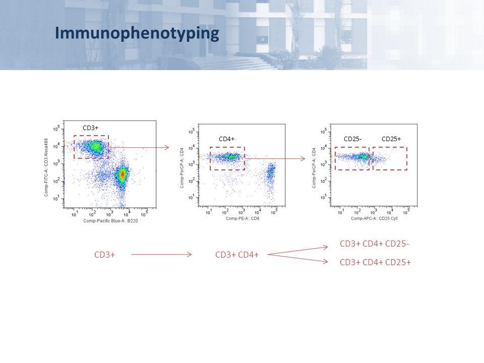Immunophenotyping CD3+ CD4+ CD25- CD3+ CD3+ CD4+ CD3+ CD4+ CD25+ CD3+