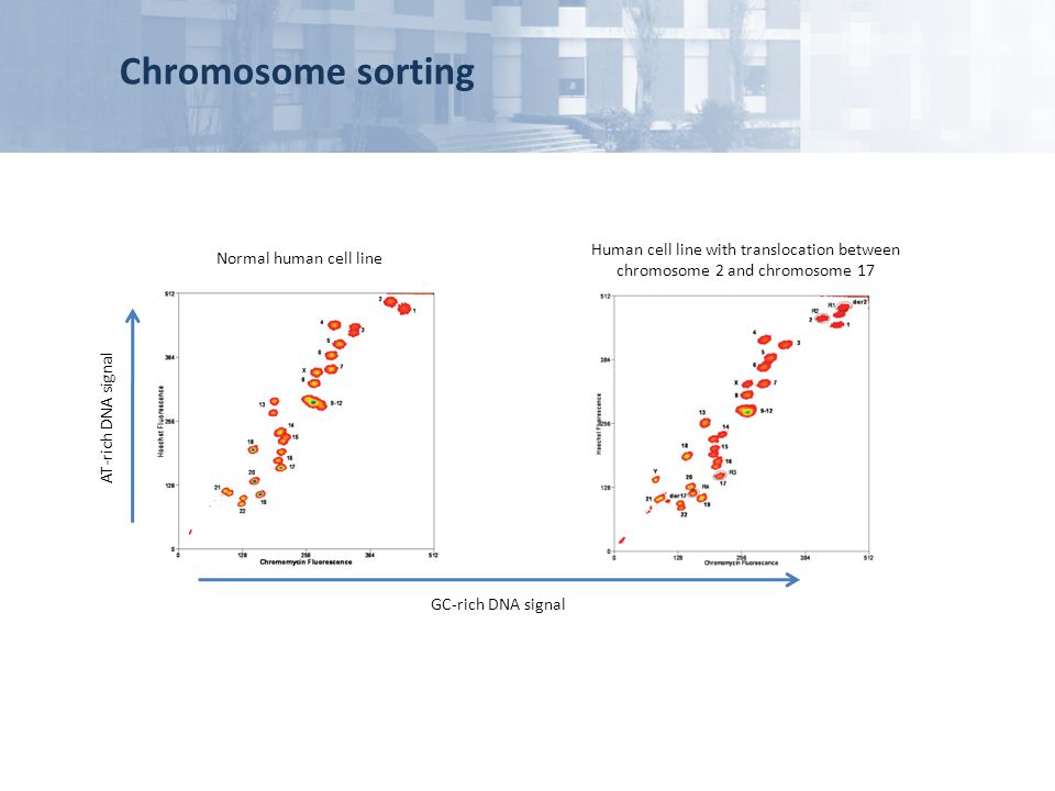 Chromosome sorting Human cell line with translocation between